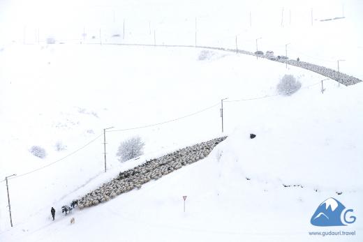 Зима в Гудаури. Военно Грузинская Дорога, Грузия.